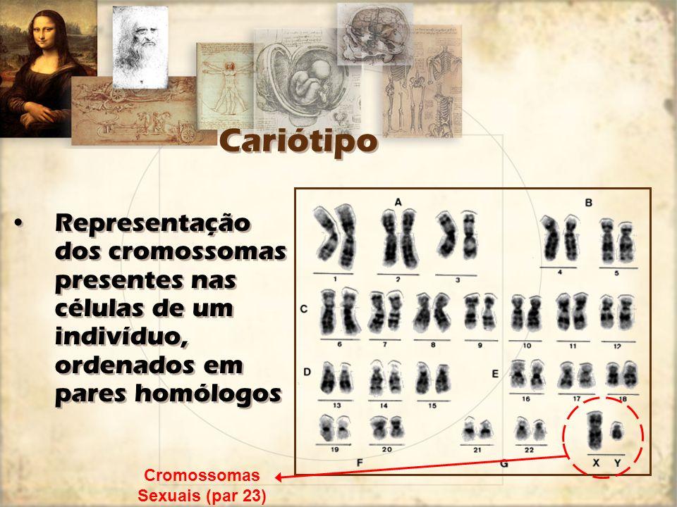 Cromossomas Metade fornecidos pelo pai, metade pela mãe –Fusão de gâmetas –23+23=46 cromossomas Metade fornecidos pelo pai, metade pela mãe –Fusão de gâmetas –23+23=46 cromossomas