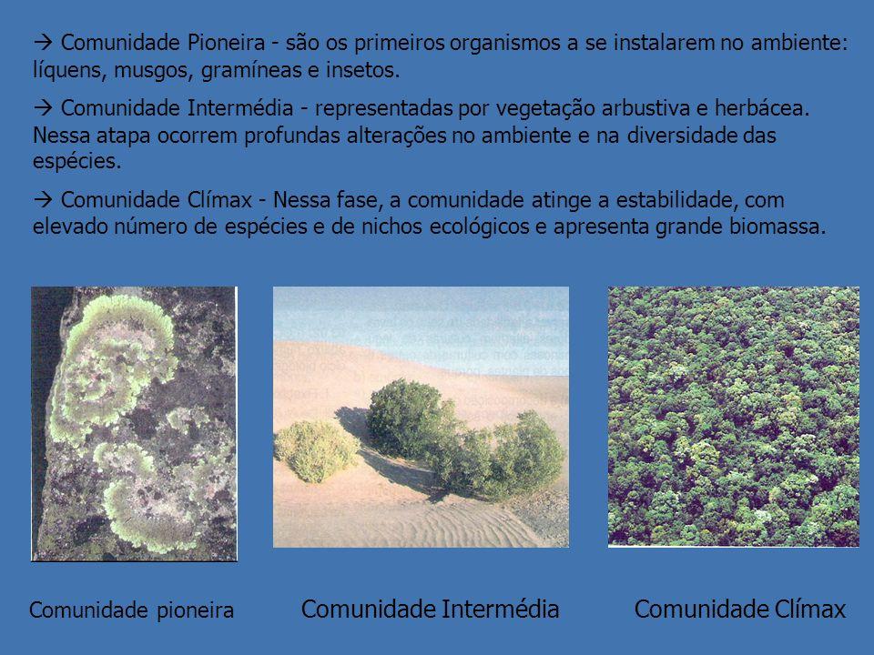 Comunidade Pioneira - são os primeiros organismos a se instalarem no ambiente: líquens, musgos, gramíneas e insetos. Comunidade Intermédia - represent