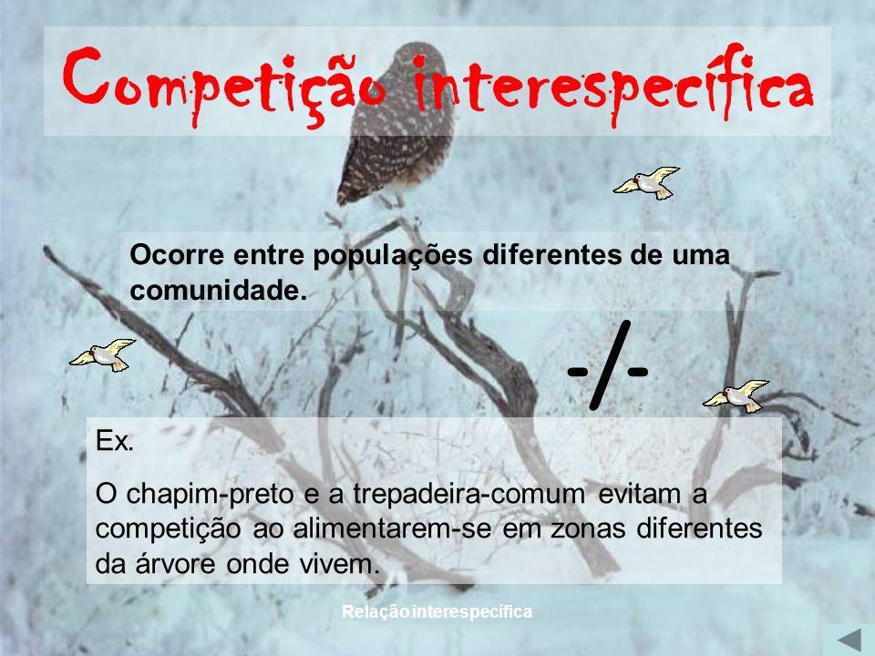 Relação interespecífica Competição interespecífica Ocorre entre populações diferentes de uma comunidade. Ex. O chapim-preto e a trepadeira-comum evita