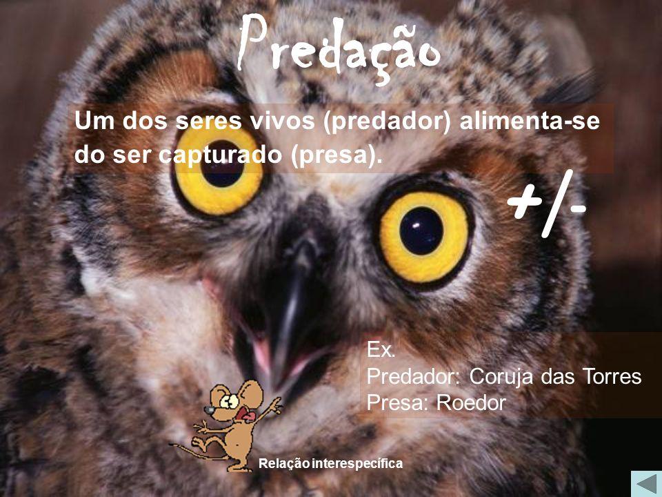 Relação interespecífica Predação Um dos seres vivos (predador) alimenta-se do ser capturado (presa). Ex. Predador: Coruja das Torres Presa: Roedor +/-