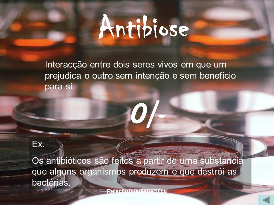 Relação interespecífica Antibiose Interacção entre dois seres vivos em que um prejudica o outro sem intenção e sem beneficio para si. 0/- Ex. Os antib