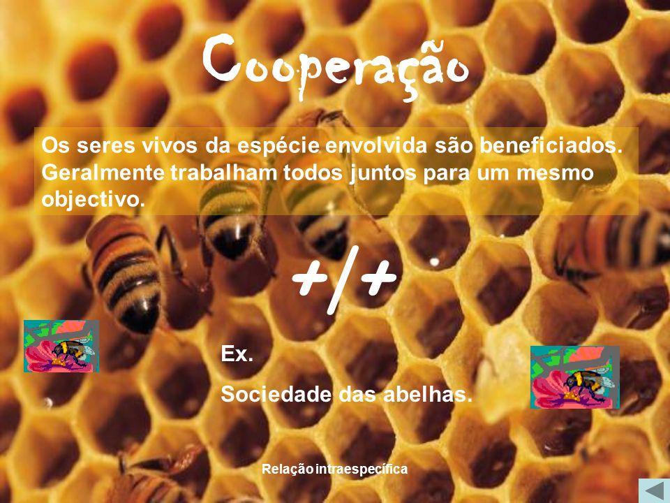 Relação intraespecífica Cooperação Os seres vivos da espécie envolvida são beneficiados. Geralmente trabalham todos juntos para um mesmo objectivo. Ex