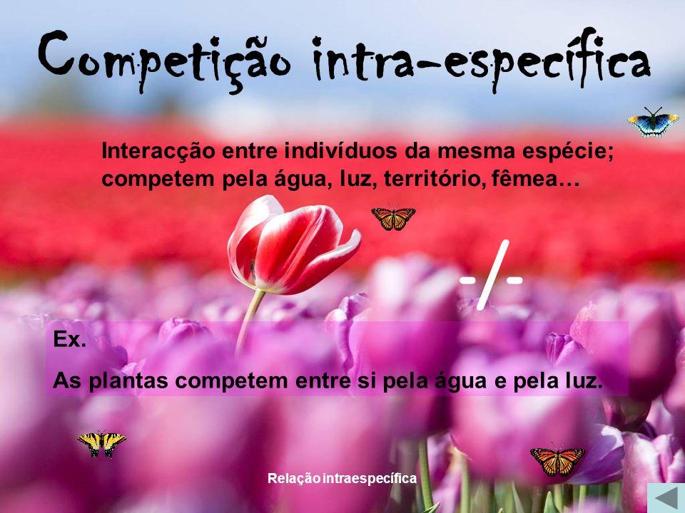 Relação intraespecífica Competição intra-específica Interacção entre indivíduos da mesma espécie; competem pela água, luz, território, fêmea… Ex. As p