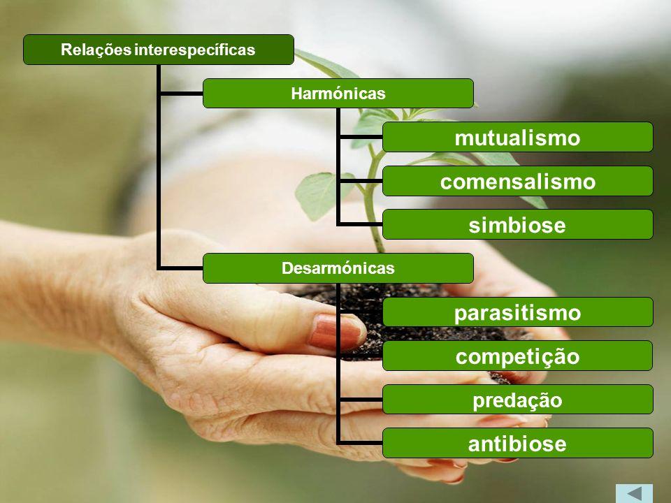 Relações interespecíficas Harmónicas mutualismo comensalismo simbiose Desarmónicas parasitismo competição predação antibiose