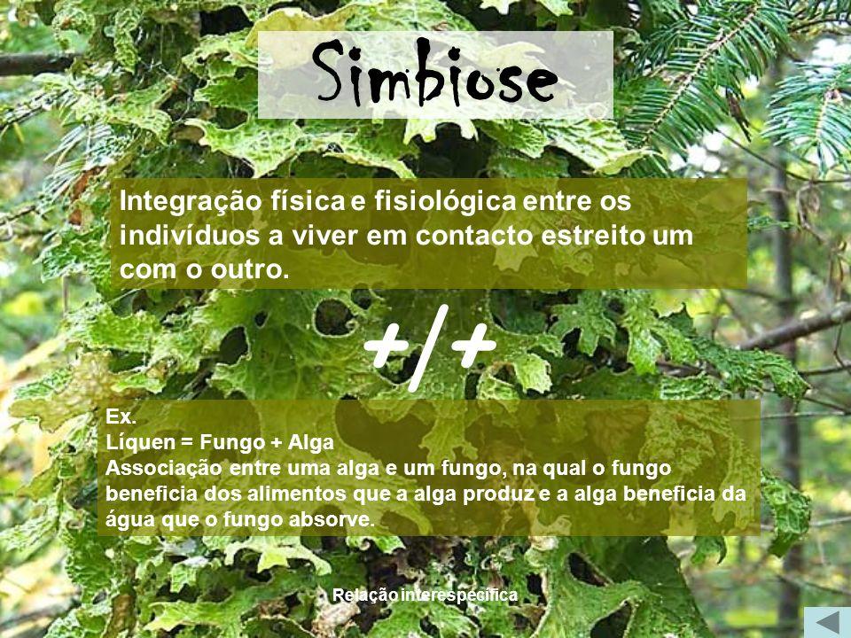 Relação interespecífica Simbiose Ex. Líquen = Fungo + Alga Associação entre uma alga e um fungo, na qual o fungo beneficia dos alimentos que a alga pr
