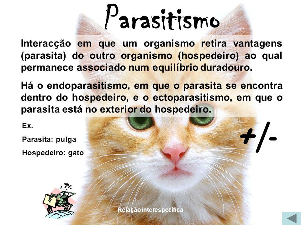 Relação interespecífica Parasitismo Interacção em que um organismo retira vantagens (parasita) do outro organismo (hospedeiro) ao qual permanece assoc