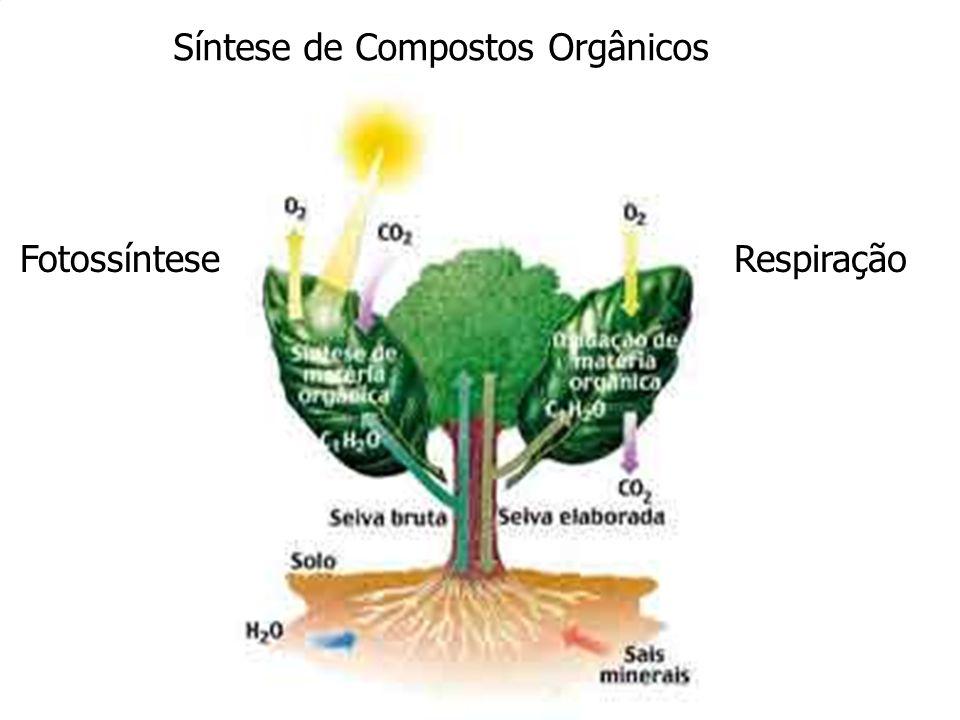Síntese de Compostos Orgânicos FotossínteseRespiração