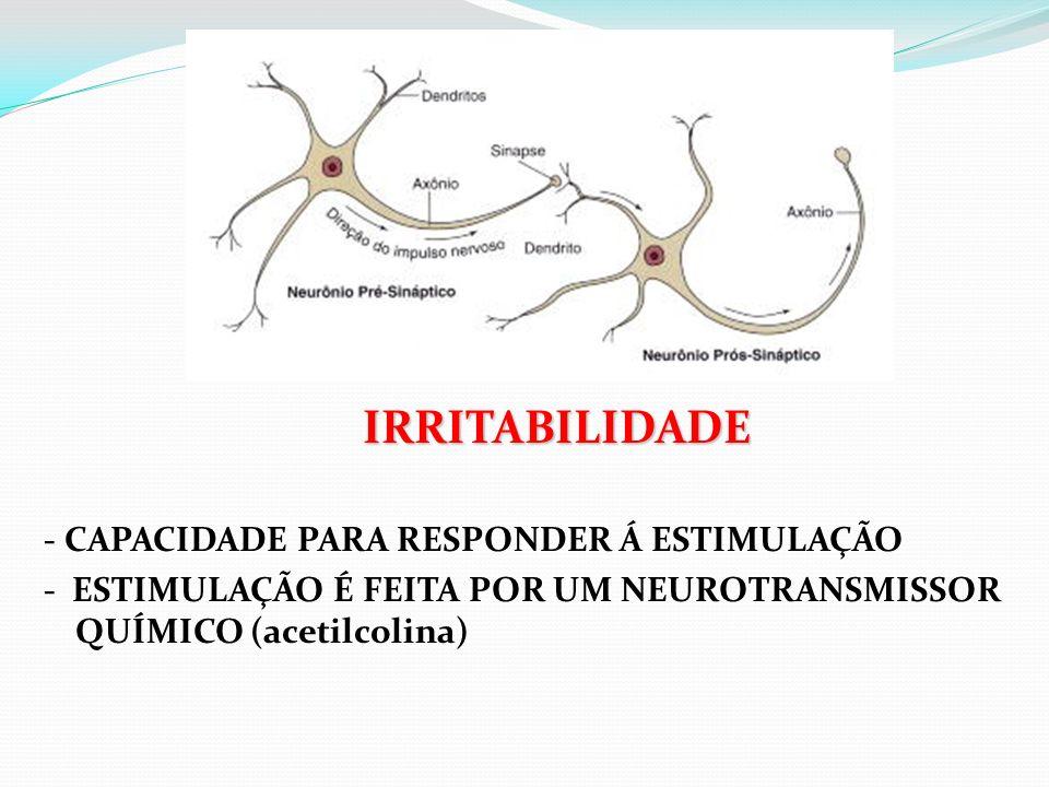 IRRITABILIDADE - CAPACIDADE PARA RESPONDER Á ESTIMULAÇÃO - ESTIMULAÇÃO É FEITA POR UM NEUROTRANSMISSOR QUÍMICO (acetilcolina)