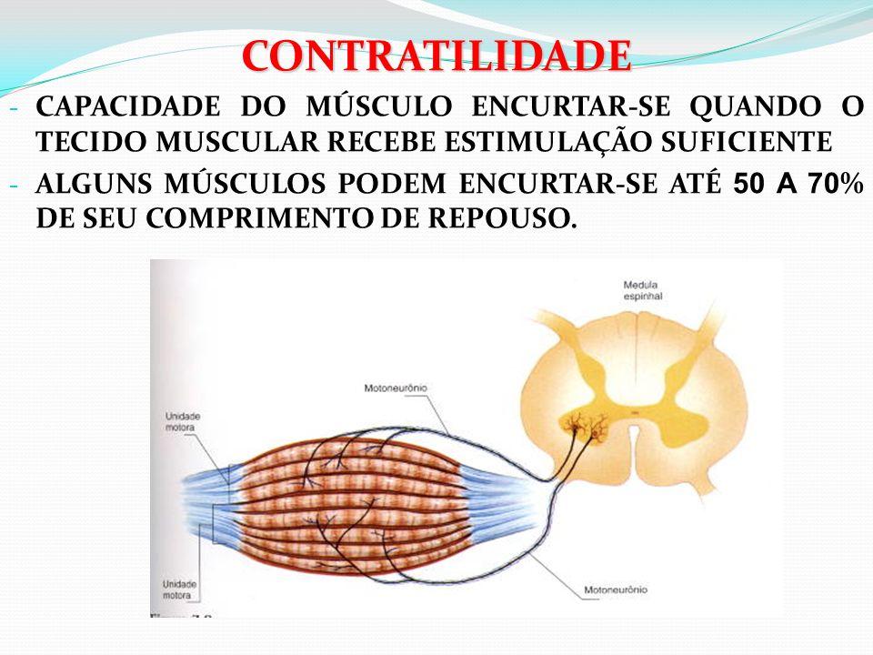 CONTRATILIDADE - CAPACIDADE DO MÚSCULO ENCURTAR-SE QUANDO O TECIDO MUSCULAR RECEBE ESTIMULAÇÃO SUFICIENTE - ALGUNS MÚSCULOS PODEM ENCURTAR-SE ATÉ 50 A