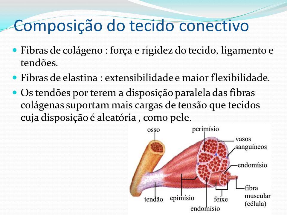 Composição do tecido conectivo Fibras de colágeno : força e rigidez do tecido, ligamento e tendões. Fibras de elastina : extensibilidade e maior flexi