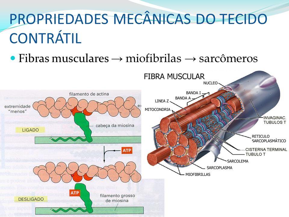 PROPRIEDADES MECÂNICAS DO TECIDO CONTRÁTIL Fibras musculares miofibrilas sarcômeros