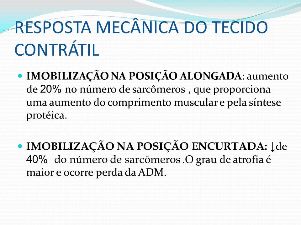 RESPOSTA MECÂNICA DO TECIDO CONTRÁTIL IMOBILIZAÇÃO NA POSIÇÃO ALONGADA: aumento de 20% no número de sarcômeros, que proporciona uma aumento do comprim
