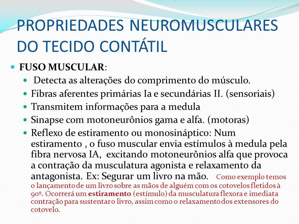 PROPRIEDADES NEUROMUSCULARES DO TECIDO CONTÁTIL FUSO MUSCULAR: Detecta as alterações do comprimento do músculo. Fibras aferentes primárias Ia e secund