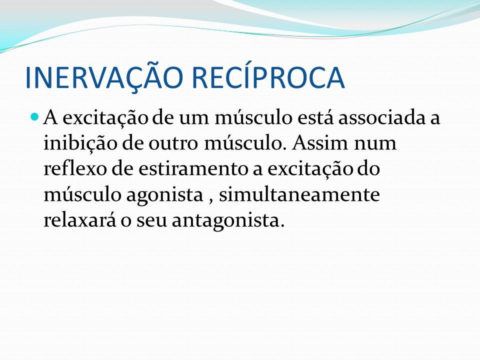 INERVAÇÃO RECÍPROCA A excitação de um músculo está associada a inibição de outro músculo. Assim num reflexo de estiramento a excitação do músculo agon