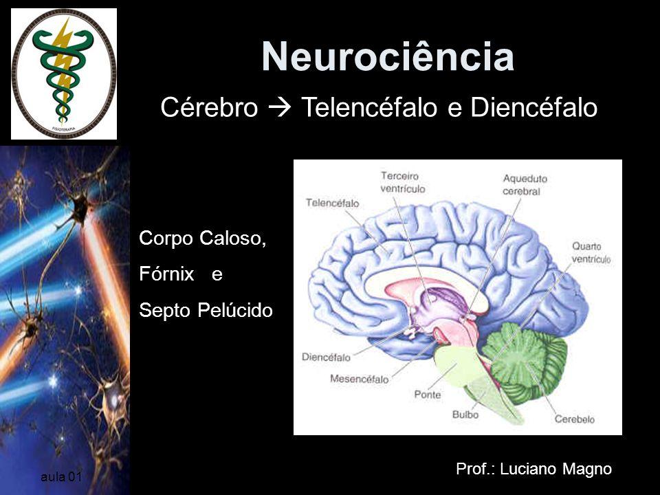 Neurociência Prof.: Luciano Magno aula 01 Corpo Caloso, Fórnix e Septo Pelúcido Cérebro Telencéfalo e Diencéfalo