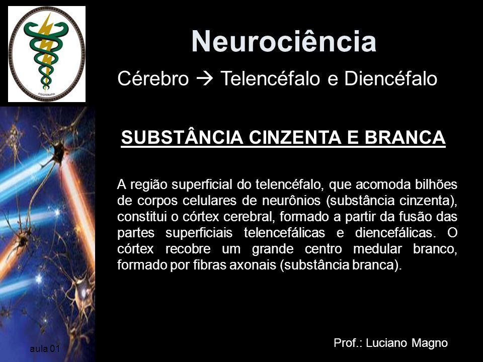 Neurociência Prof.: Luciano Magno aula 01 A região superficial do telencéfalo, que acomoda bilhões de corpos celulares de neurônios (substância cinzen