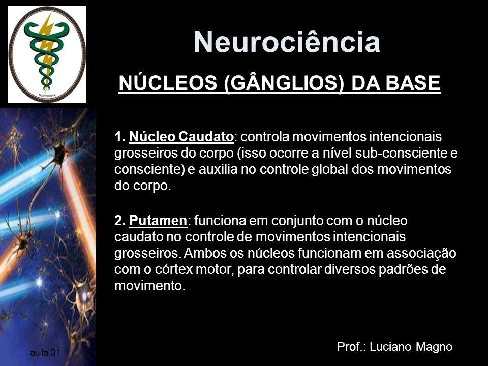 Neurociência Prof.: Luciano Magno aula 01 1. Núcleo Caudato: controla movimentos intencionais grosseiros do corpo (isso ocorre a nível sub-consciente