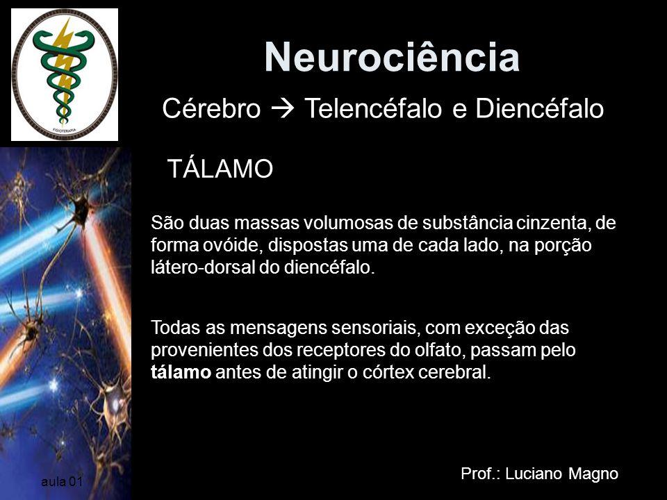 Neurociência Prof.: Luciano Magno aula 01 Cérebro Telencéfalo e Diencéfalo TÁLAMO São duas massas volumosas de substância cinzenta, de forma ovóide, d