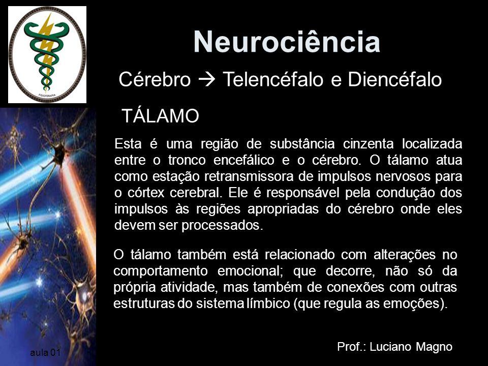 Neurociência Prof.: Luciano Magno aula 01 Esta é uma região de substância cinzenta localizada entre o tronco encefálico e o cérebro. O tálamo atua com