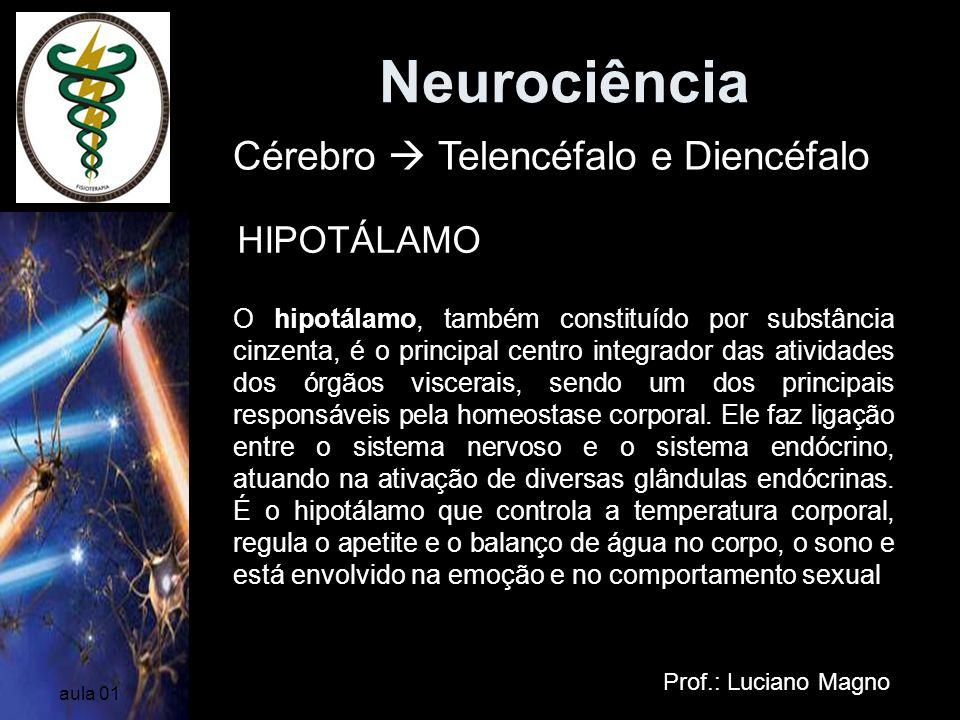Neurociência Prof.: Luciano Magno aula 01 Cérebro Telencéfalo e Diencéfalo HIPOTÁLAMO O hipotálamo, também constituído por substância cinzenta, é o pr
