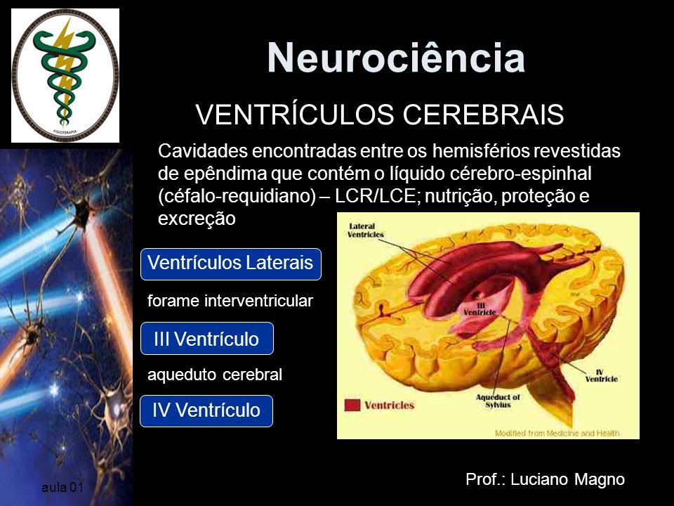 Neurociência Prof.: Luciano Magno aula 01 VENTRÍCULOS CEREBRAIS Cavidades encontradas entre os hemisférios revestidas de epêndima que contém o líquido