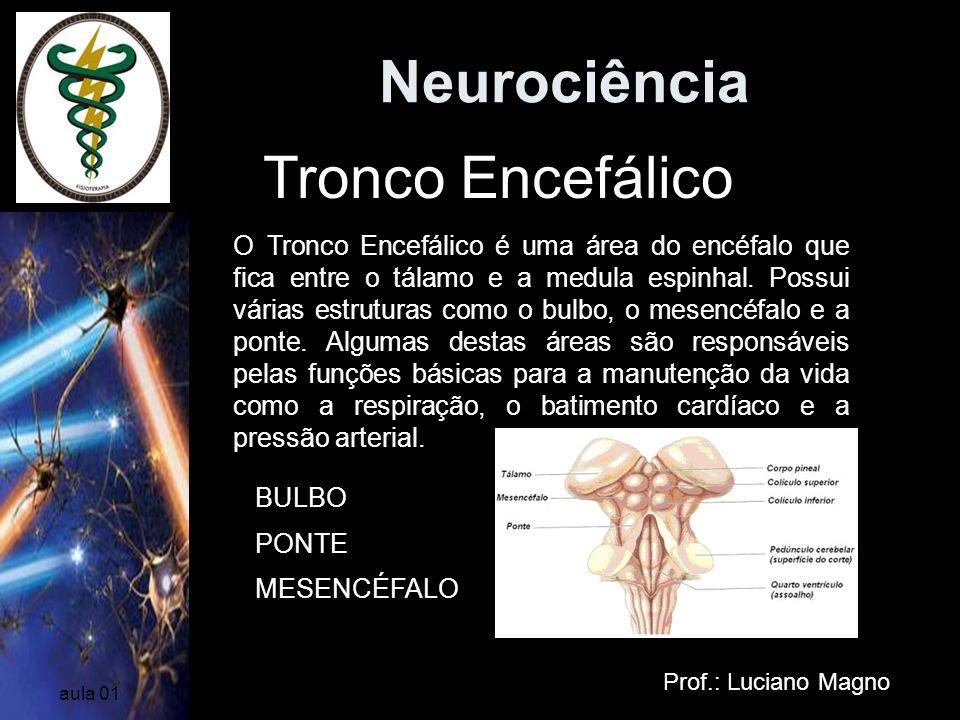 Neurociência Prof.: Luciano Magno aula 01 Tronco Encefálico O Tronco Encefálico é uma área do encéfalo que fica entre o tálamo e a medula espinhal. Po