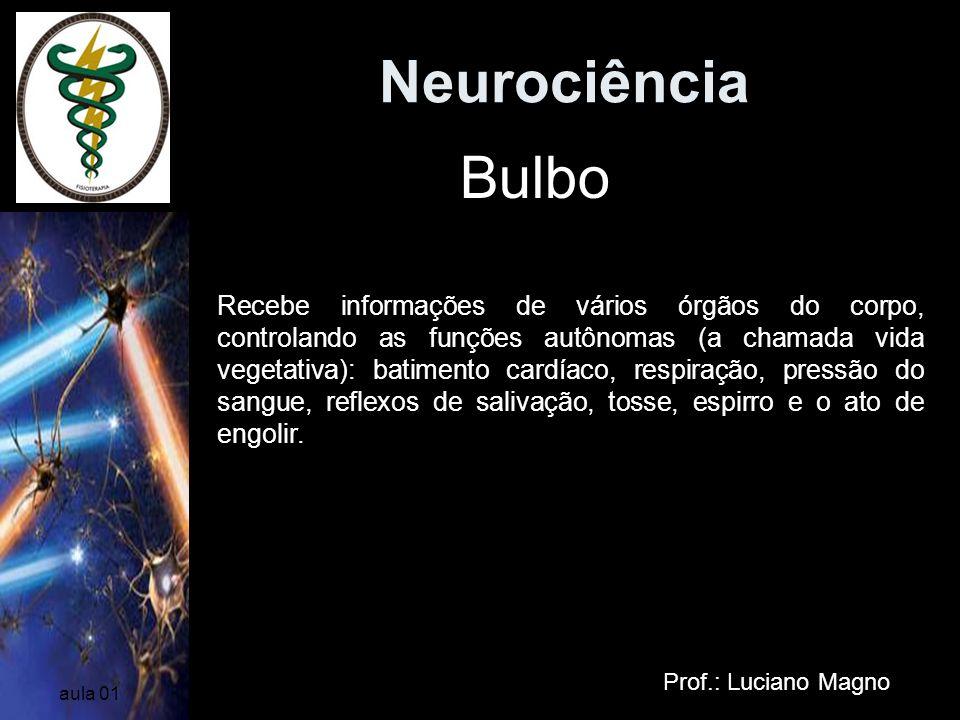Neurociência Prof.: Luciano Magno aula 01 Bulbo Recebe informações de vários órgãos do corpo, controlando as funções autônomas (a chamada vida vegetat