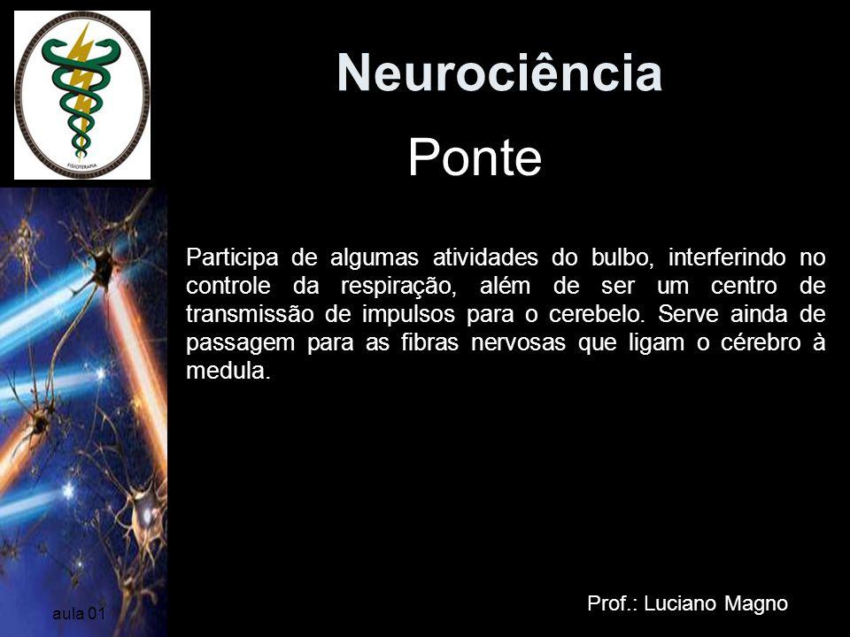 Neurociência Prof.: Luciano Magno aula 01 Ponte Participa de algumas atividades do bulbo, interferindo no controle da respiração, além de ser um centr