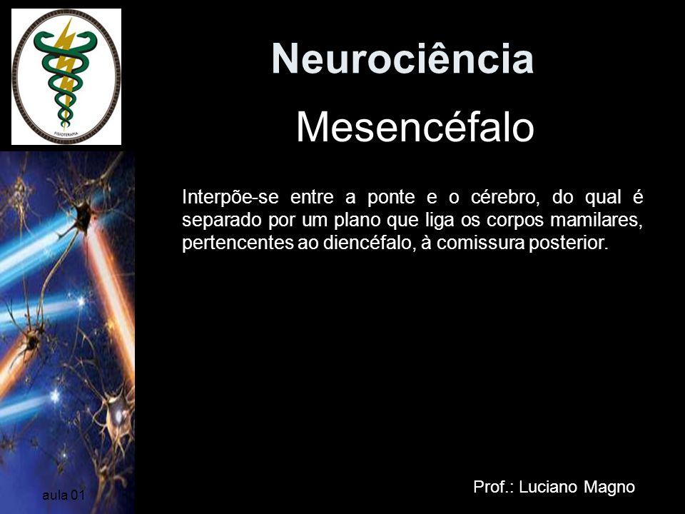 Neurociência Prof.: Luciano Magno aula 01 Mesencéfalo Interpõe-se entre a ponte e o cérebro, do qual é separado por um plano que liga os corpos mamila