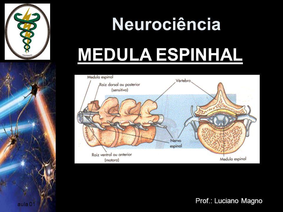 Neurociência Prof.: Luciano Magno aula 01 MEDULA ESPINHAL