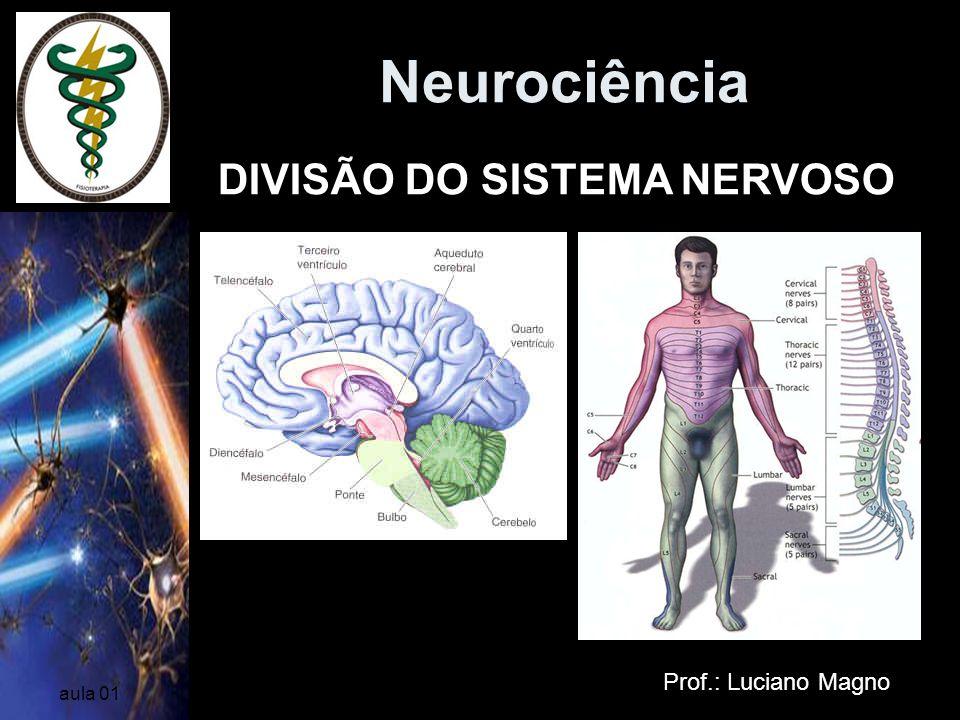 Neurociência Prof.: Luciano Magno aula 01 VENTRÍCULOS CEREBRAIS Cavidades encontradas entre os hemisférios revestidas de epêndima que contém o líquido cérebro-espinhal (céfalo-requidiano) – LCR/LCE; nutrição, proteção e excreção Ventrículos Laterais III Ventrículo IV Ventrículo forame interventricular aqueduto cerebral