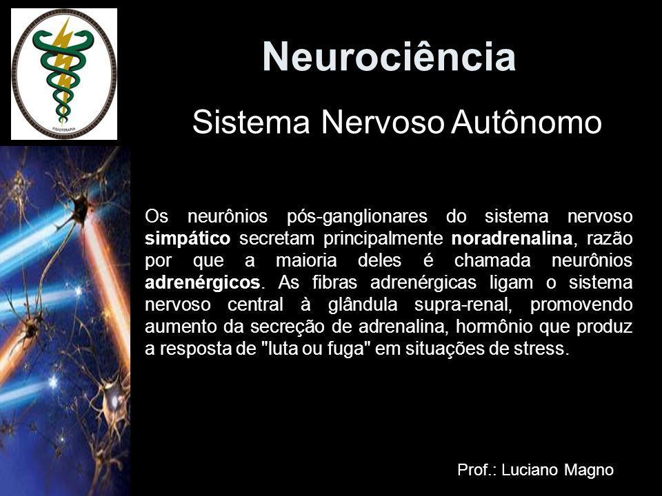 Neurociência Prof.: Luciano Magno Os neurônios pós-ganglionares do sistema nervoso simpático secretam principalmente noradrenalina, razão por que a ma
