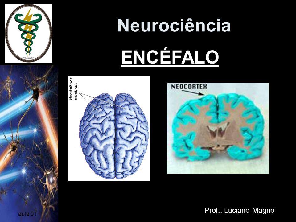 Neurociência Prof.: Luciano Magno aula 01 Cerebelo Situado atrás do cérebro está o cerebelo, que é primariamente um centro para o controle dos movimentos iniciados pelo córtex motor (possui extensivas conexões com o cérebro e a medula espinhal).