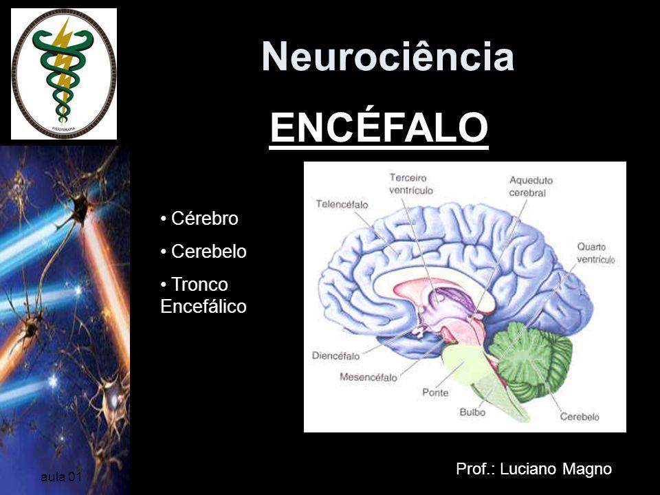 Neurociência Prof.: Luciano Magno aula 01 Cerebelo Dividido em dois hemisférios Porém, ao contrário dos hemisférios cerebrais*, o lado esquerdo do cerebelo está relacionado com os movimentos do lado esquerdo do corpo, enquanto o lado direito, com os movimentos do lado direito do corpo.