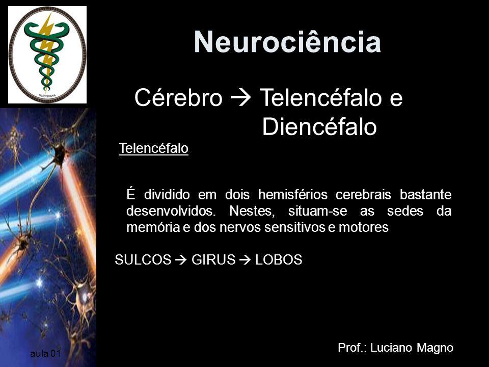 Neurociência Prof.: Luciano Magno aula 01 Cérebro Telencéfalo e Diencéfalo Telencéfalo É dividido em dois hemisférios cerebrais bastante desenvolvidos