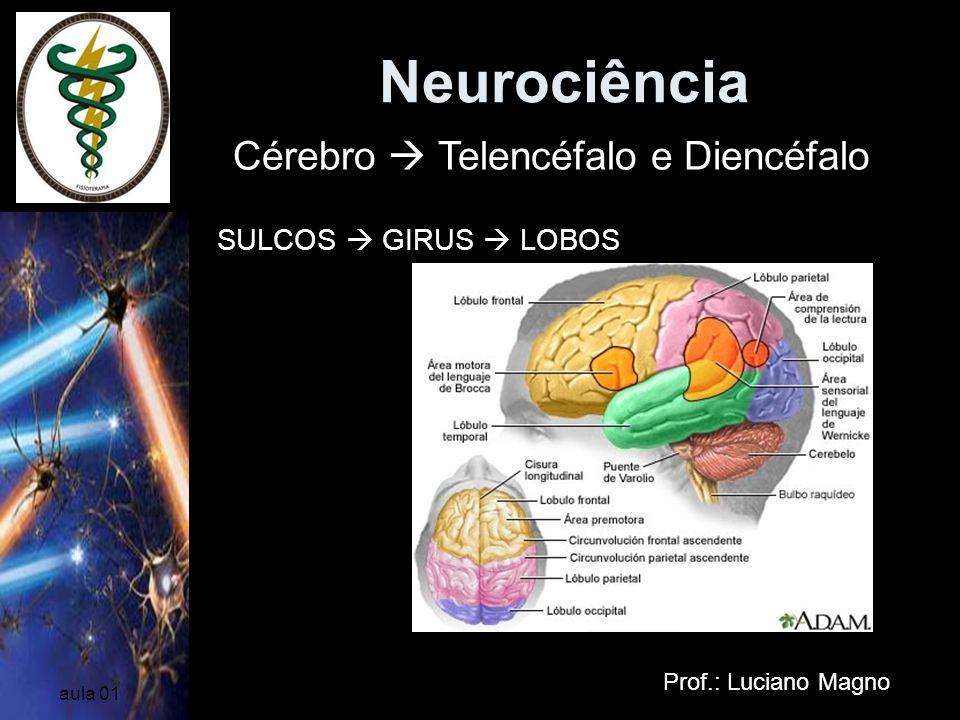 Neurociência Prof.: Luciano Magno aula 01 Diencéfalo Cérebro Telencéfalo e Diencéfalo Compreende as seguintes partes: tálamo, hipotálomo, epitálamo e subtálamo, todas em relação com o III ventrículo.