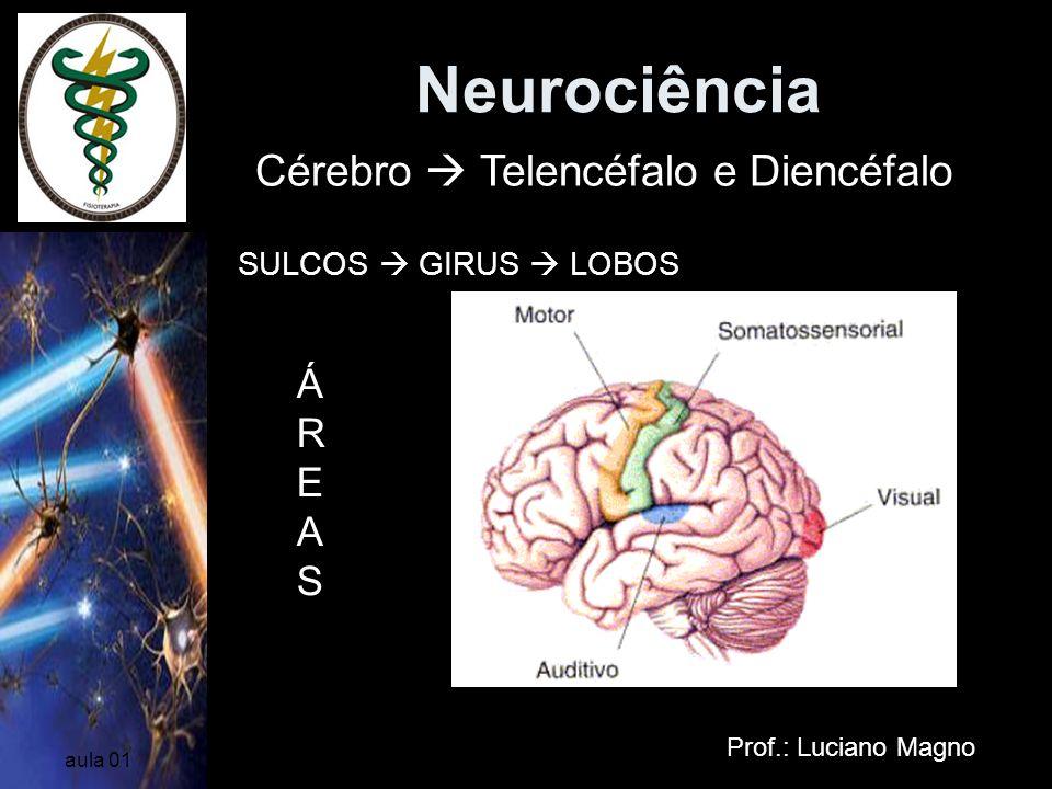 Neurociência Prof.: Luciano Magno aula 01 SULCOS GIRUS LOBOS FUNÇÕESFUNÇÕES Cérebro Telencéfalo e Diencéfalo