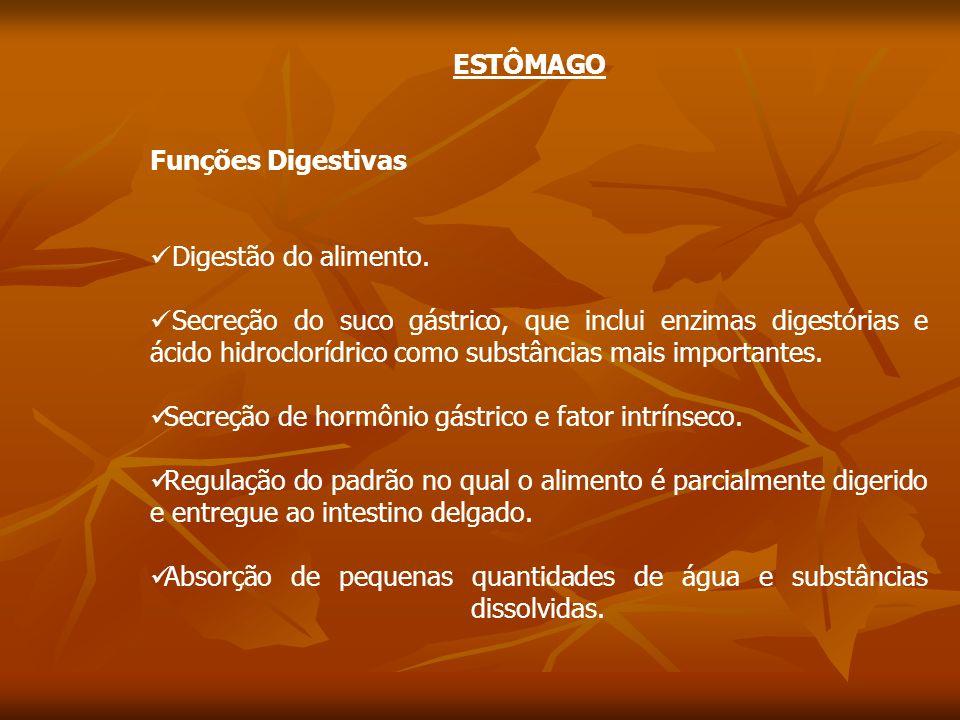 ESTÔMAGO Funções Digestivas Digestão do alimento.