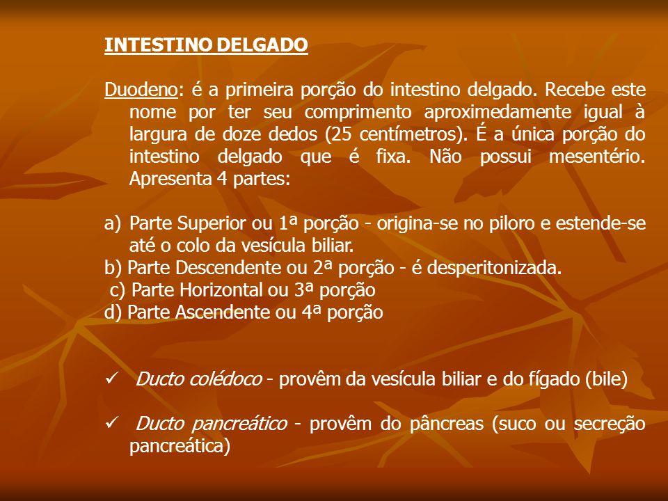 INTESTINO DELGADO Duodeno: é a primeira porção do intestino delgado.