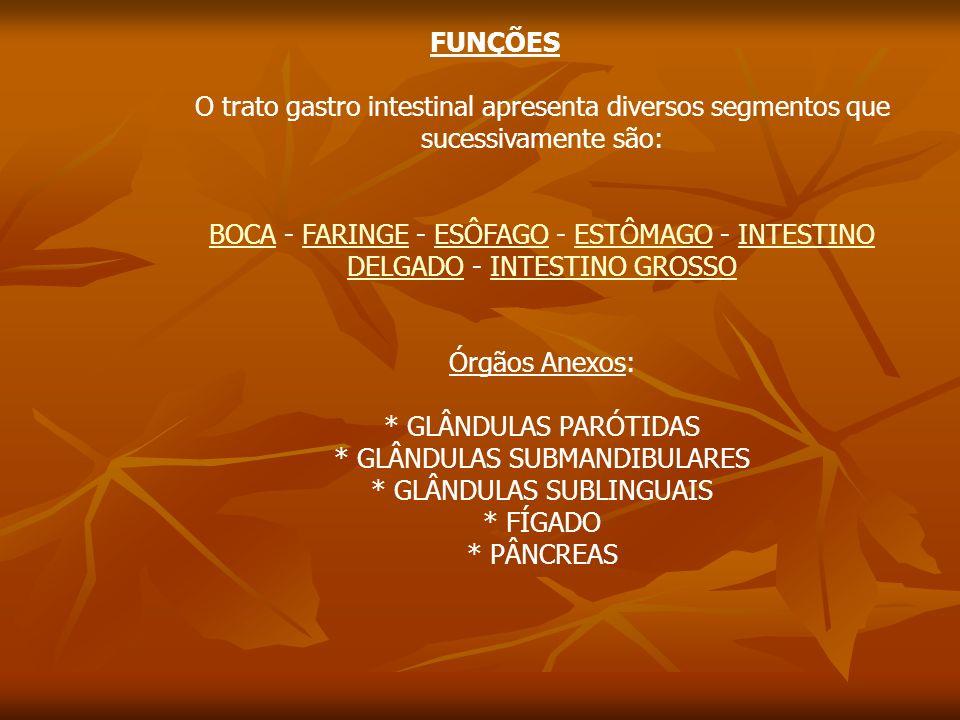 FUNÇÕES O trato gastro intestinal apresenta diversos segmentos que sucessivamente são: BOCABOCA - FARINGE - ESÔFAGO - ESTÔMAGO - INTESTINO DELGADO - INTESTINO GROSSOFARINGEESÔFAGOESTÔMAGOINTESTINO DELGADOINTESTINO GROSSO Órgãos Anexos: * GLÂNDULAS PARÓTIDAS * GLÂNDULAS SUBMANDIBULARES * GLÂNDULAS SUBLINGUAIS * FÍGADO * PÂNCREAS