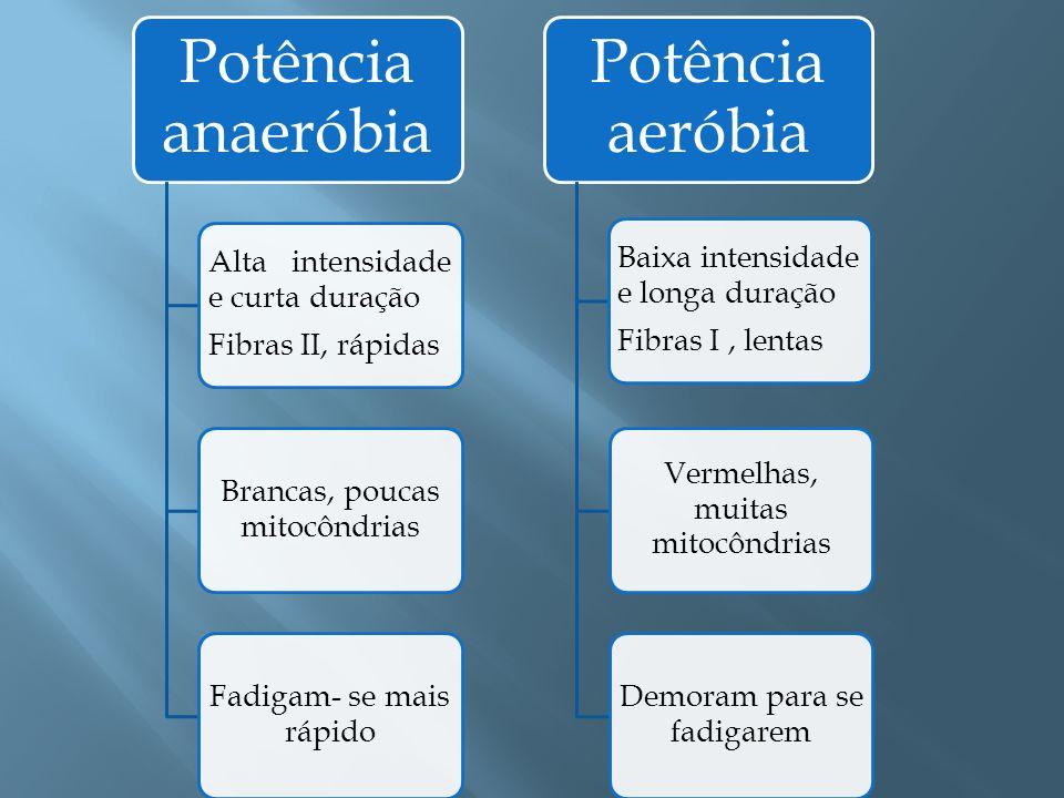 Potência anaeróbia Alta intensidade e curta duração Fibras II, rápidas Brancas, poucas mitocôndrias Fadigam- se mais rápido Potência aeróbia Baixa int