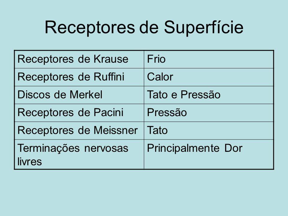 Receptores de Superfície Receptores de KrauseFrio Receptores de RuffiniCalor Discos de MerkelTato e Pressão Receptores de PaciniPressão Receptores de