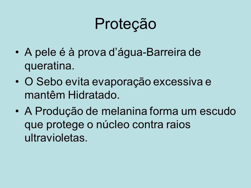 Proteção A pele é à prova dágua-Barreira de queratina. O Sebo evita evaporação excessiva e mantêm Hidratado. A Produção de melanina forma um escudo qu