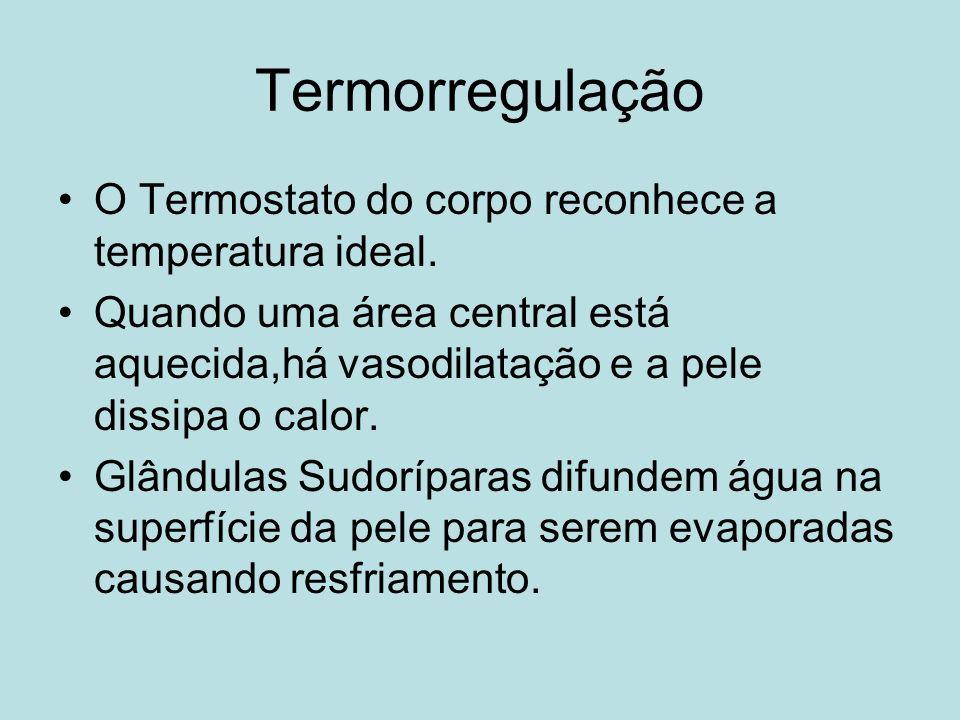 Termorregulação O Termostato do corpo reconhece a temperatura ideal. Quando uma área central está aquecida,há vasodilatação e a pele dissipa o calor.
