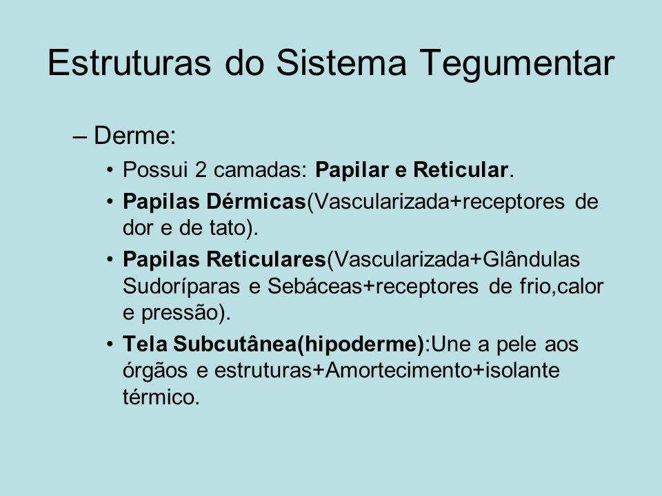 Estruturas do Sistema Tegumentar –Derme: Possui 2 camadas: Papilar e Reticular. Papilas Dérmicas(Vascularizada+receptores de dor e de tato). Papilas R