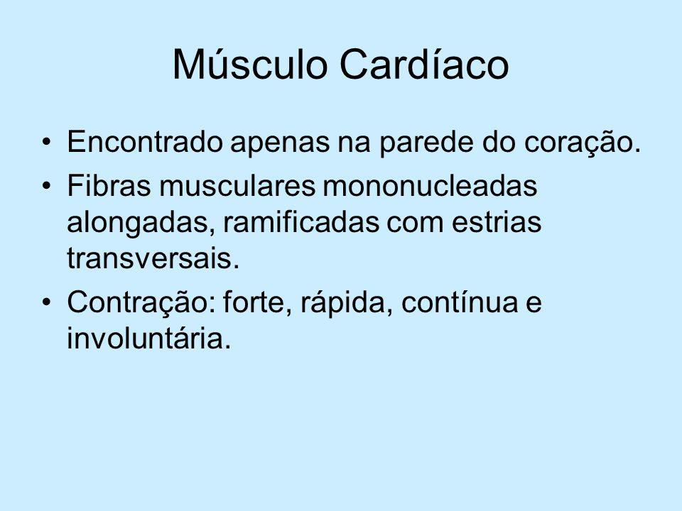 Músculo Cardíaco Encontrado apenas na parede do coração. Fibras musculares mononucleadas alongadas, ramificadas com estrias transversais. Contração: f