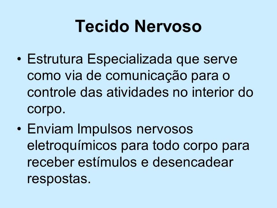 Tecido Nervoso Estrutura Especializada que serve como via de comunicação para o controle das atividades no interior do corpo. Enviam Impulsos nervosos