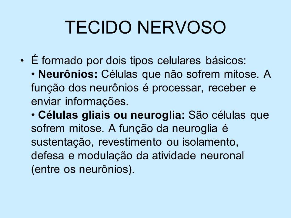 TECIDO NERVOSO É formado por dois tipos celulares básicos: Neurônios: Células que não sofrem mitose. A função dos neurônios é processar, receber e env