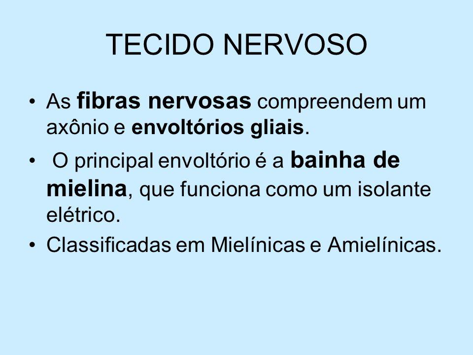 TECIDO NERVOSO As fibras nervosas compreendem um axônio e envoltórios gliais. O principal envoltório é a bainha de mielina, que funciona como um isola