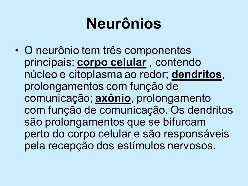 Neurônios O neurônio tem três componentes principais: corpo celular, contendo núcleo e citoplasma ao redor; dendritos, prolongamentos com função de co